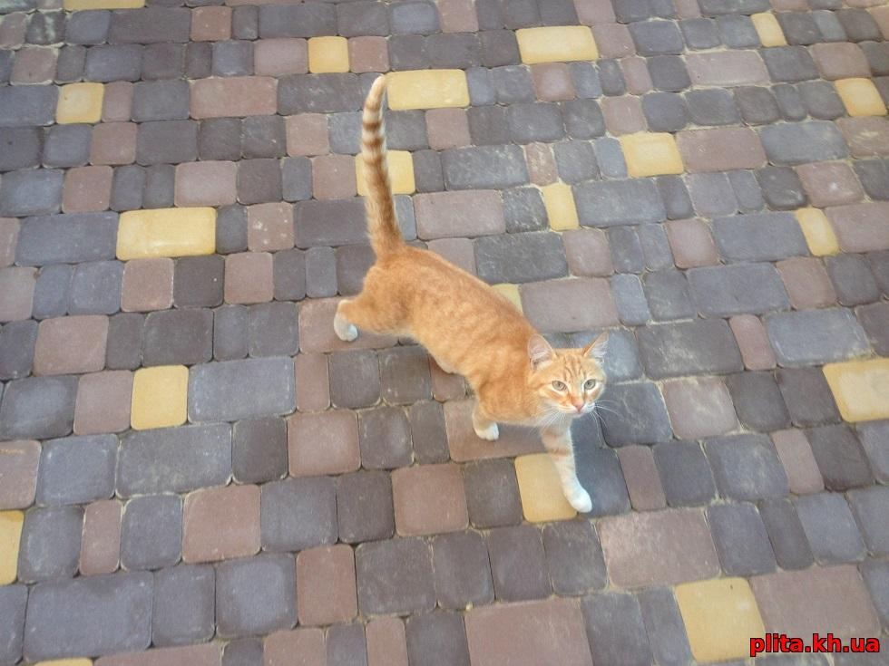Укладка тротуарной плитки Старый город производство Игуана, кот